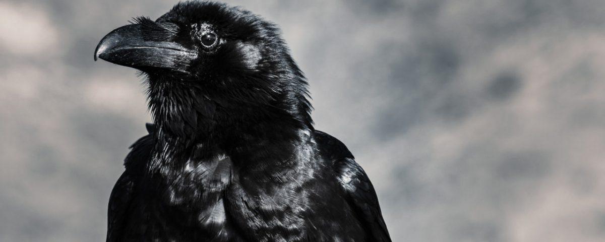 Was ist Ravencoin?
