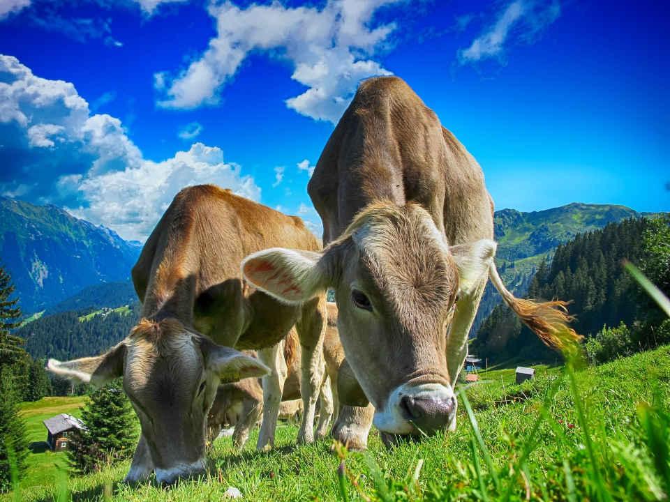 IOTA Future Farm Konsortium