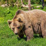 Bitcoin Crash Bärenmarkt