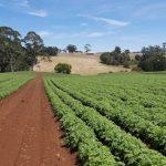 Yield Farming Compound