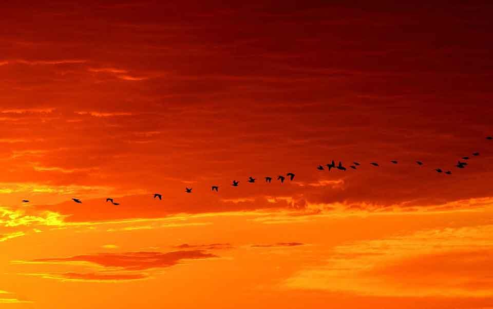 YAM Migration