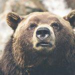 Bitcoin Bärenmarkt