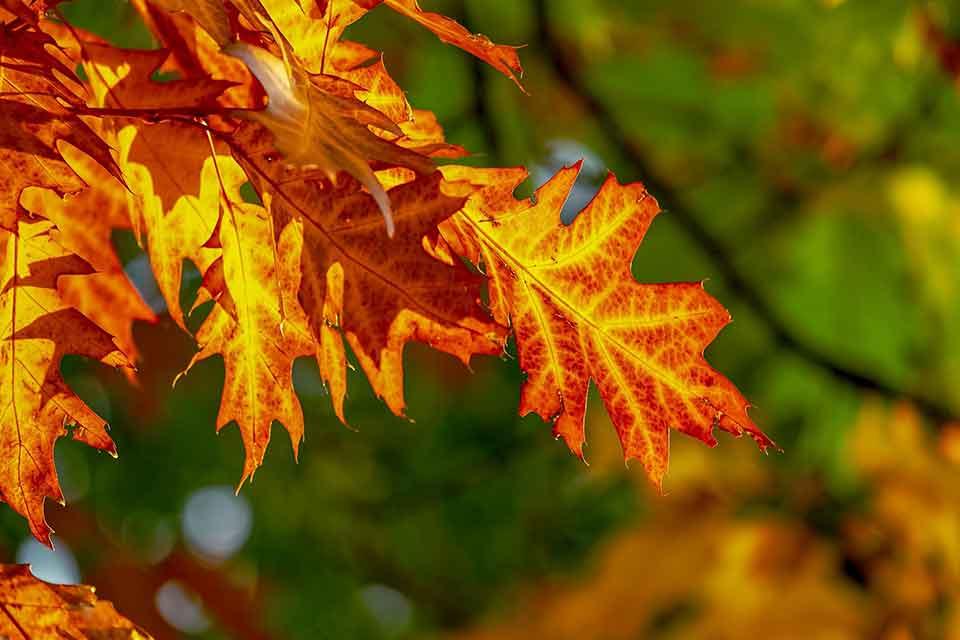 BItcoin goldener Oktober
