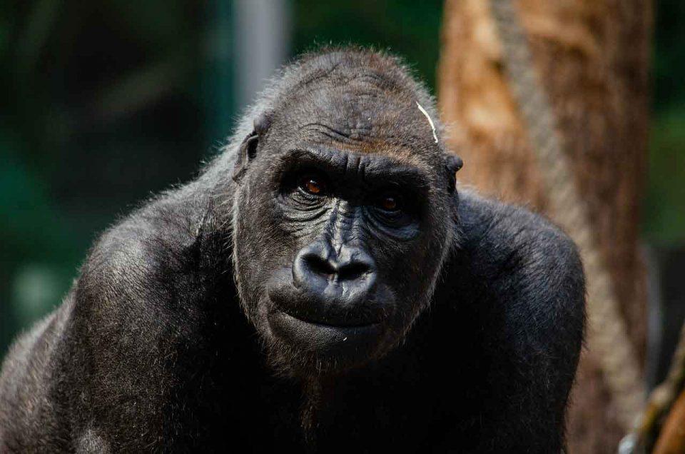 Solana Degenerate Apes